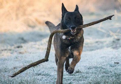 Hund mit Stock